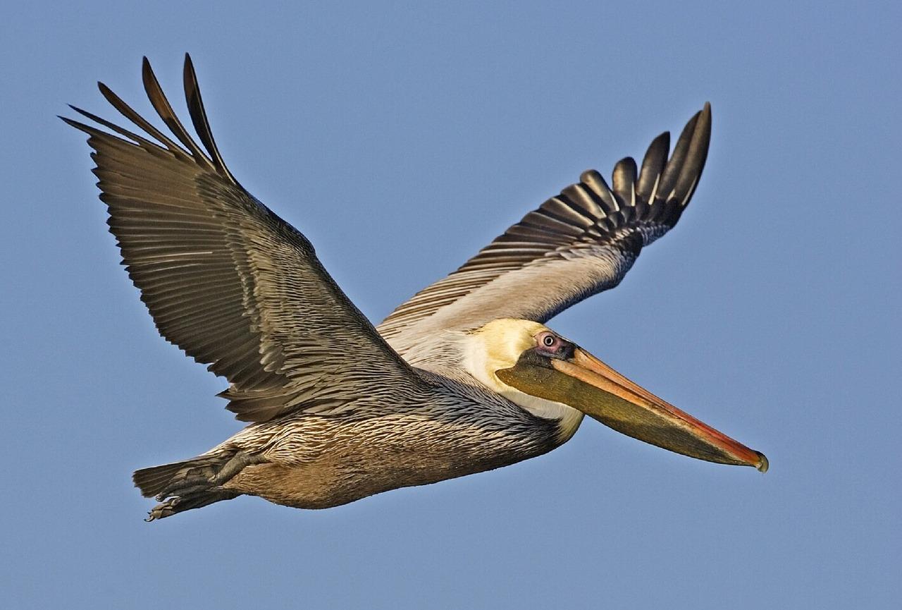 villa-sol-y-luna-pelicano